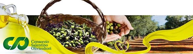 consorzio-solentino-olivicoltori
