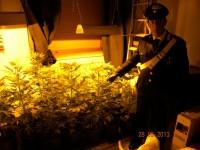 piante-di-marijuana (2)