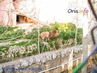 zoo-di-oria