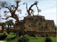 Il sito archeologico di Crepacore a Torre Santa Susanna