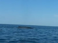 balena-brindisi