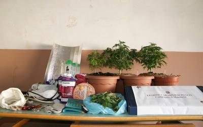 piante-canapa-manduria