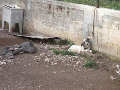 animali maltrattati (2)