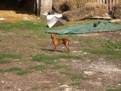 animali maltrattati (3)