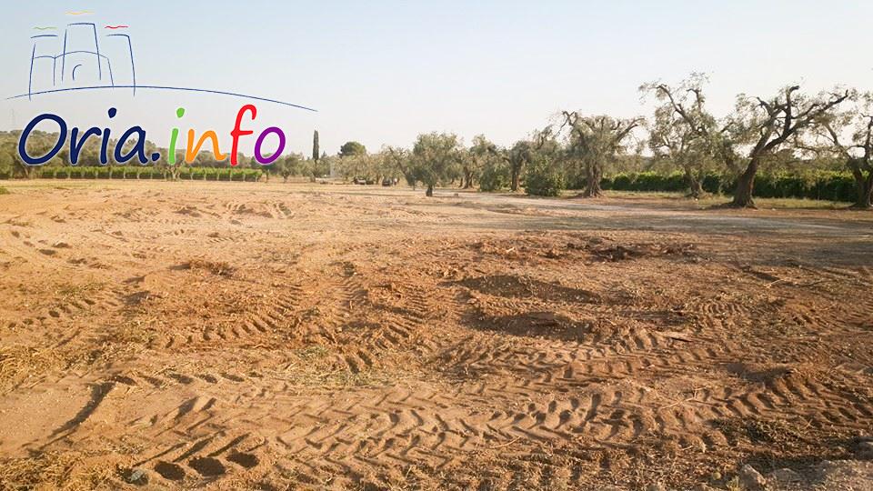 Un'area che poche ore prima era occupata da 18 ulivi, totalmente rasa al suolo. La legna è stata portata via, mentre le foglie e i rami più piccoli sono stati trinciati e mischiati con la terra.